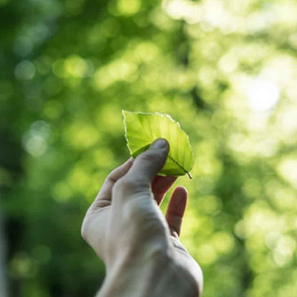 Aειφορία - sustainability - Βιωσιμότητα